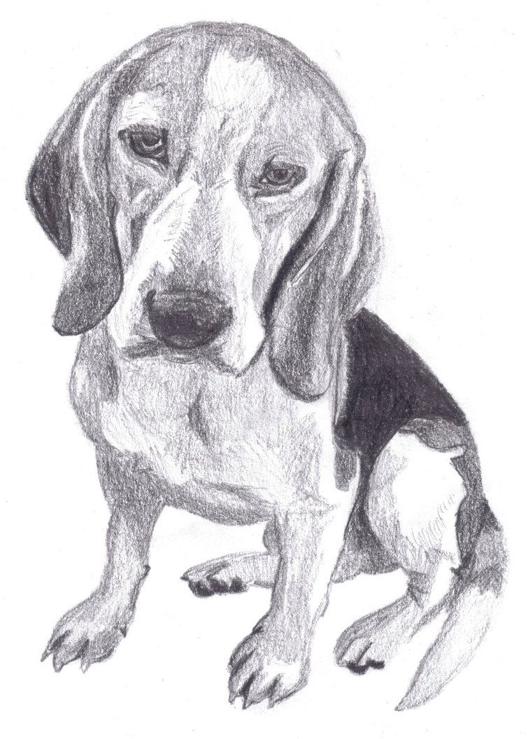 Realistic Dog Drawings Viewing Gallery Dog Drawing Dog
