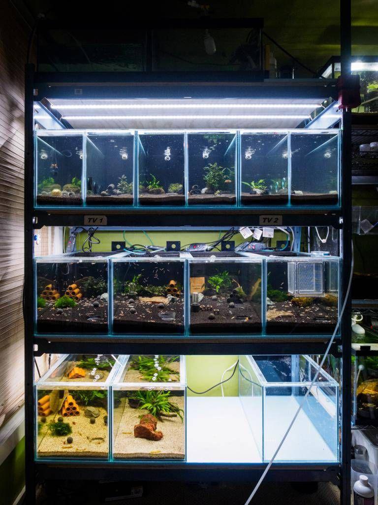 1201802 Zpsd590dc95 Jpg Aquarium Fish Tank Aquarium Fish Fish Breeding