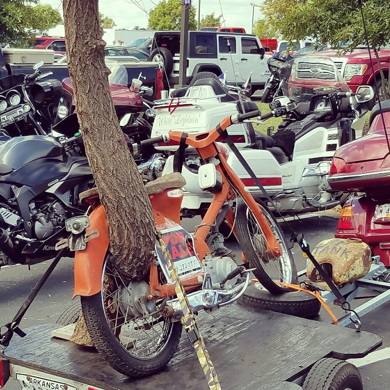Weird moped, old tree