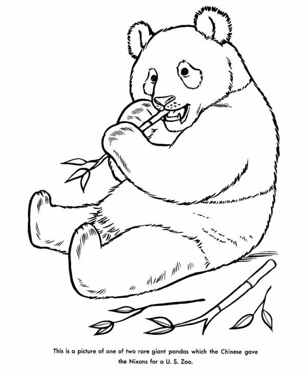 Rare Giant Panda Coloring Page Jpg 600 734 Panda Coloring