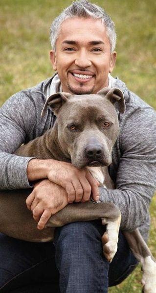 Dog Training Lessons Dog Training Tips Behavior Problems Dog