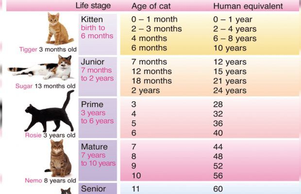 How Old Is Your Cat In Human Years Cat Age Chart Cat Ages Cat Years