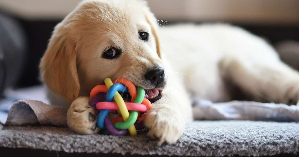 Some Common Household Objects And Products Can Be Fatal To Canines