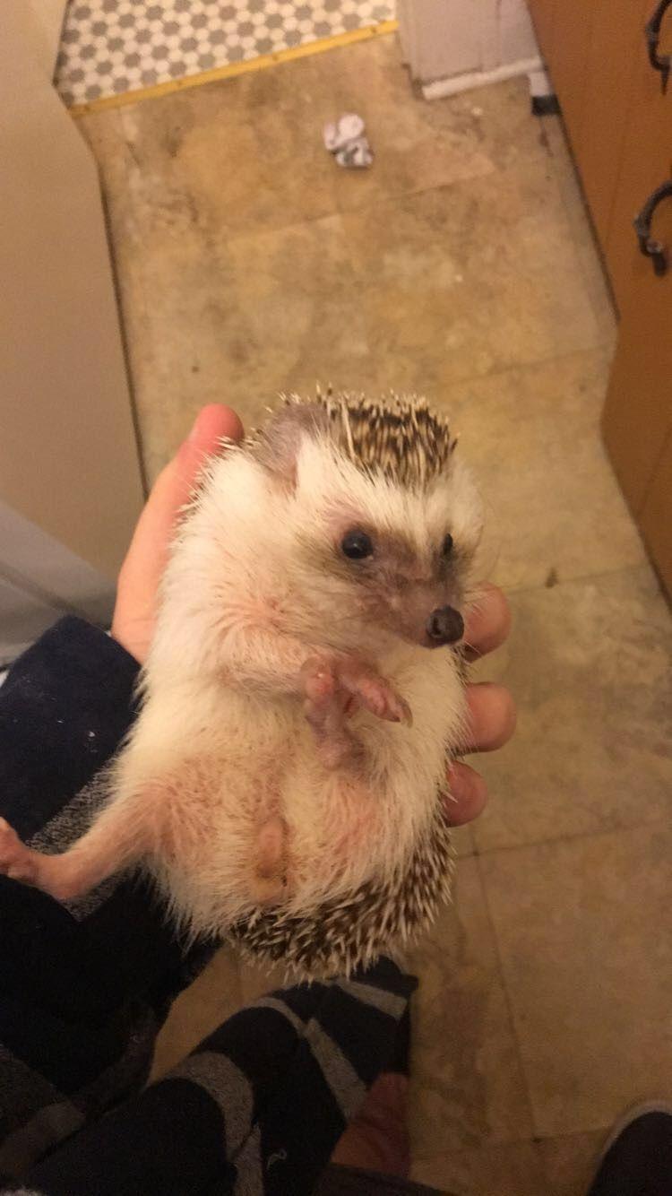 My little poop monster. Meet Hedgie everyone! http://ift.tt/2jX15s6