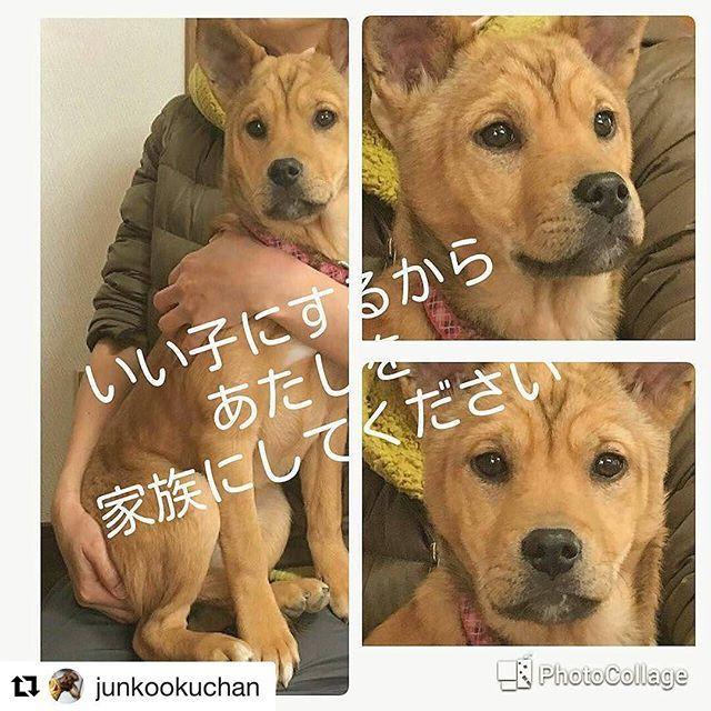 Repost Junkookuchan With Repostapp Repost Yuumin3535 With Repostapp 犬 里親募集中 保護犬 猫 かわいい 犬好きさんと繋がりたい 野良猫 ねこ部 子猫 子犬 猫好きな 人と繋がりた 子犬 お転婆 子猫