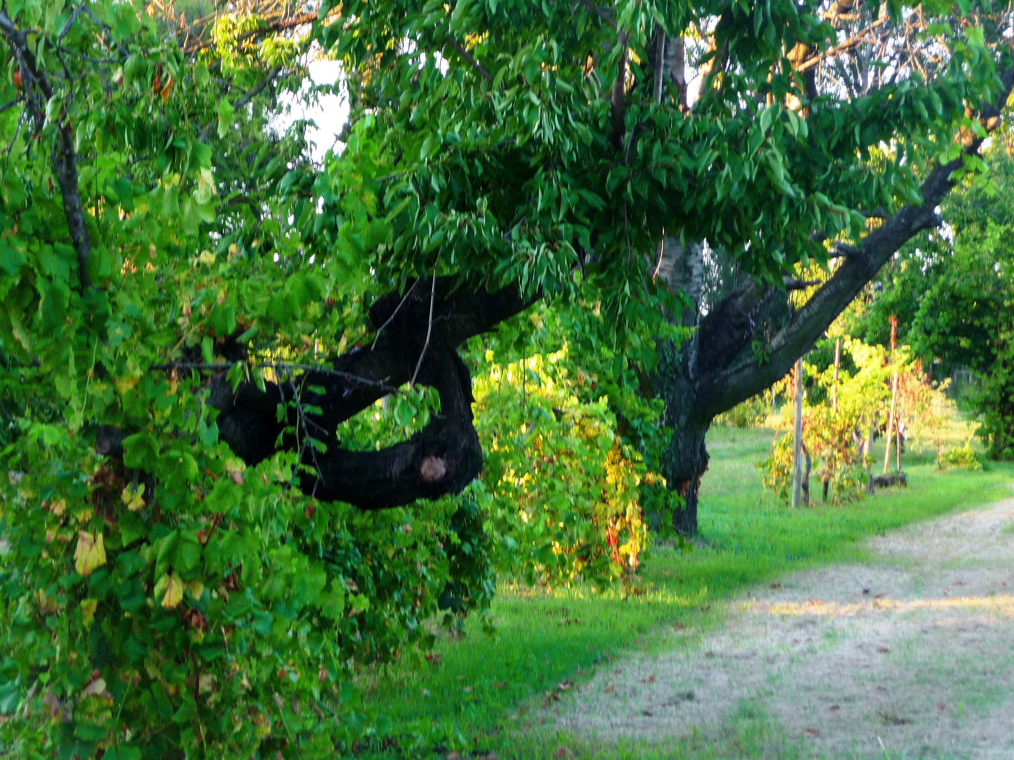 Foto Di Alberi Da Frutto alberi da frutta tradizionali del giardino campagna di zola