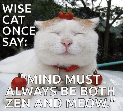 Zen Cat Cat Meme Cats Funny Cat Memes I Love Cats