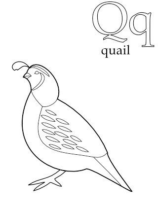 Quail California State Bird Coloring Book Quail Bird Coloring