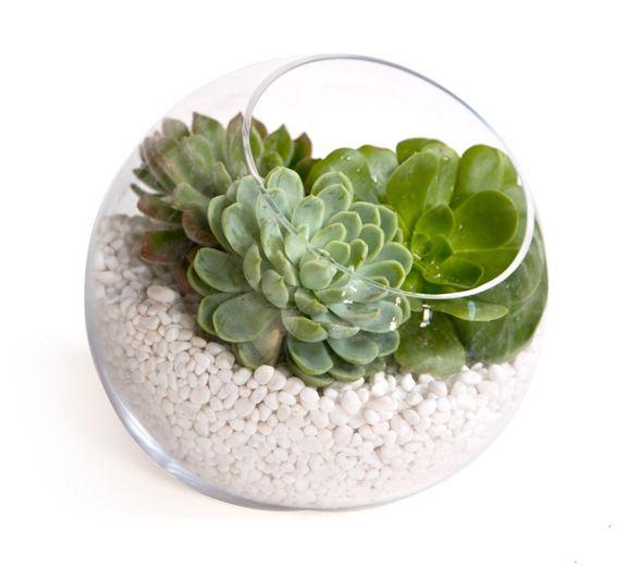 Easy DIY Centerpiece Idea Rich Succulents In Clear Zen Bowl With White Stones Wedding Etincelles Events Planner Paris Mariag