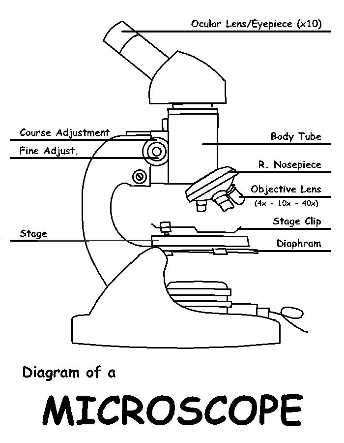 Labeledmicroscope labeled microscope diagram powerpoint labeledmicroscope labeled microscope diagram powerpoint presentation is used in freshman ccuart Image collections