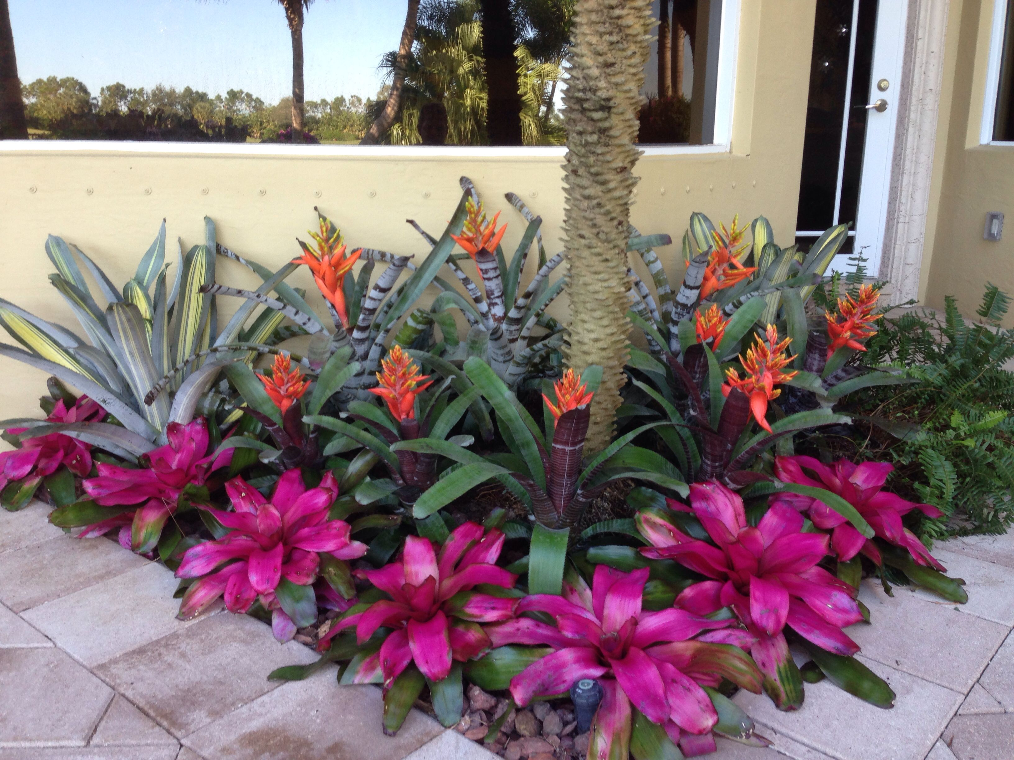 Bromeliad garden lots of color gorgeous garden for Garden plant design