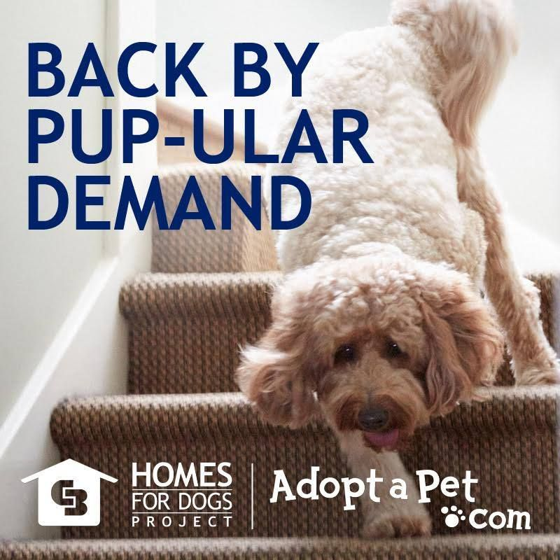 Did you know: - In 2015, we helped 20,000 pet adoptions happen in only eight months in partnership with Adopt-a-Pet.com - 88,000 Coldwell Banker Real Estate sales associates and 15,000 shelters & rescue groups worked together - More than 675 local adoption events occurred during the Homes for Dogs National Pet Adoption Weekend in August 2015 (Stay tuned: the adoption event will be replicated in Fall 2016!) Learn more about our pet project here//bit.ly/1PQHO3i