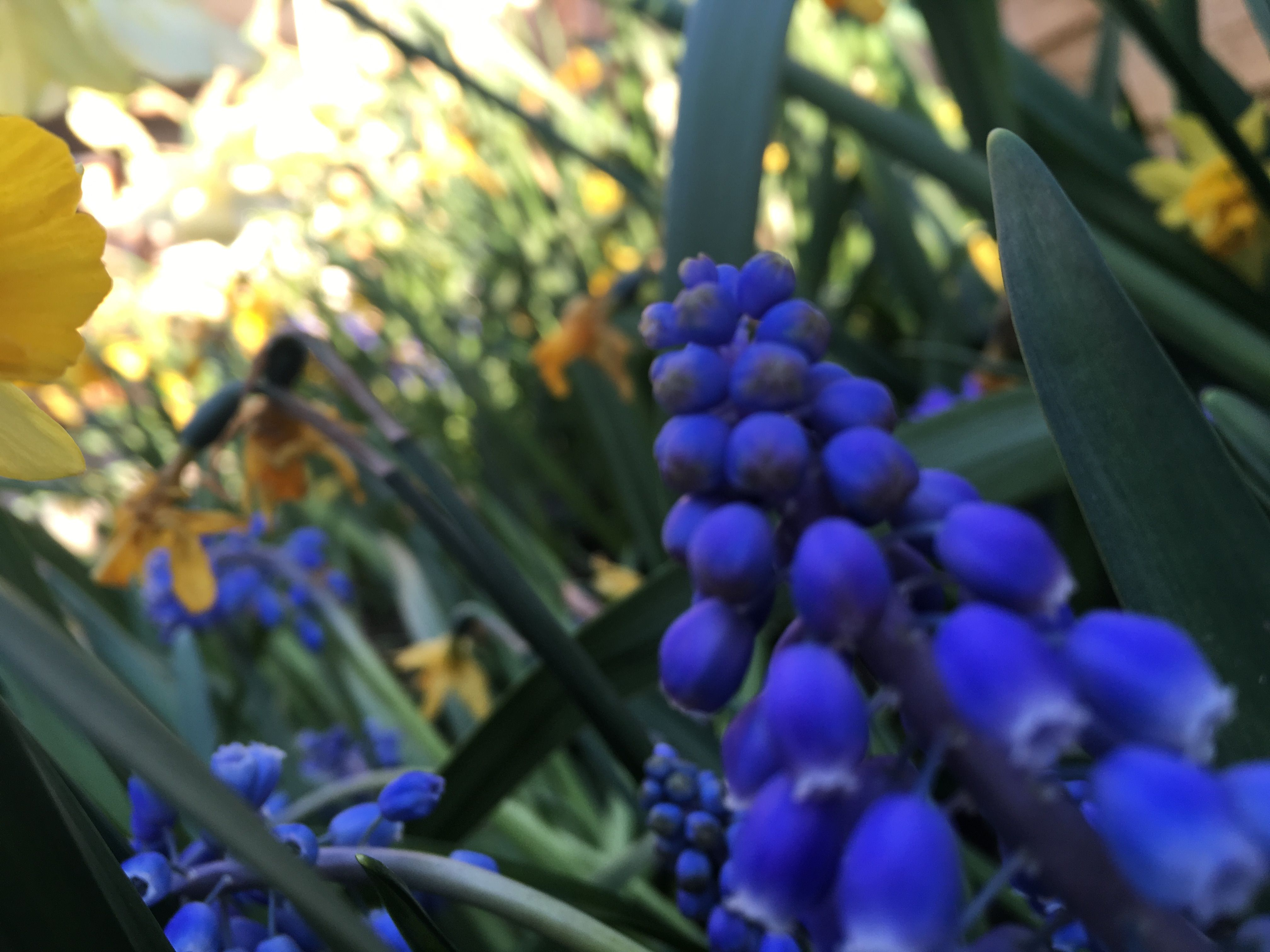 w i l d Fruit, Grapes, Photography