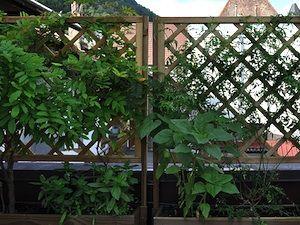 Epingle Sur Plantes Grimpantes Et Autres