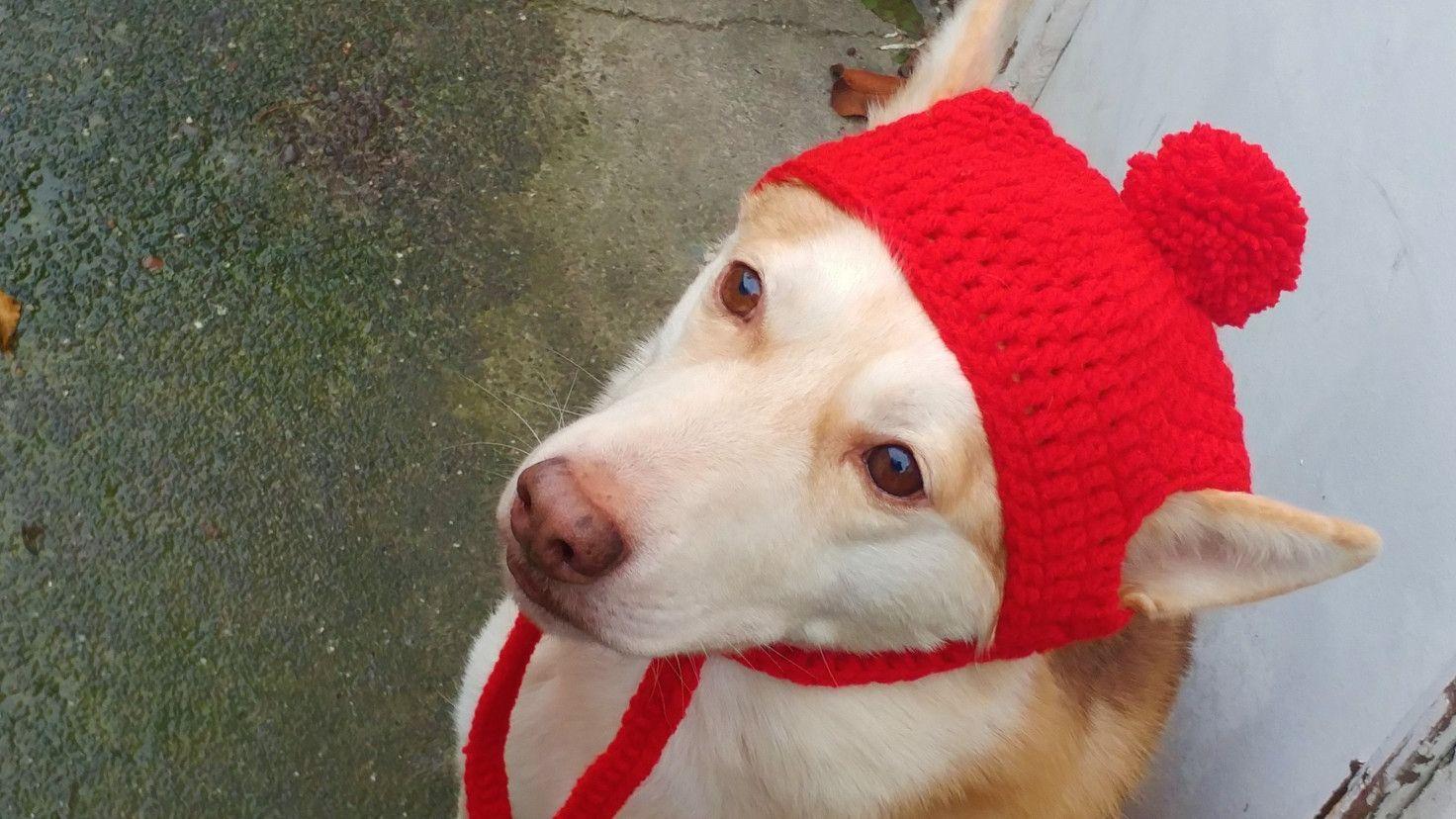 Large Xl Dog Crochet Beanie Pattern Dog Sweater Crochet Pattern Crochet Dog Crochet Dog Clothes