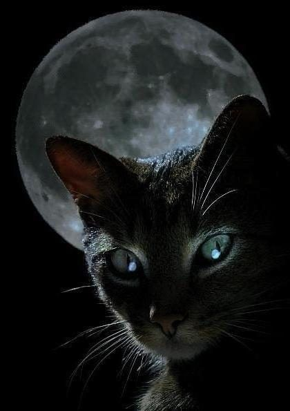 Усы котенка кота морды канид, котенка, млекопитающее, лицо ... | 595x420