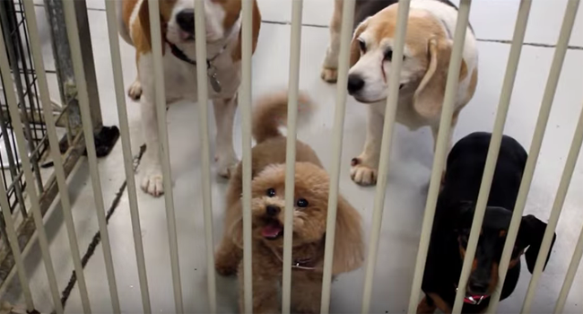Entire Day Care Is Left In Tears After A Puppy Does THIS