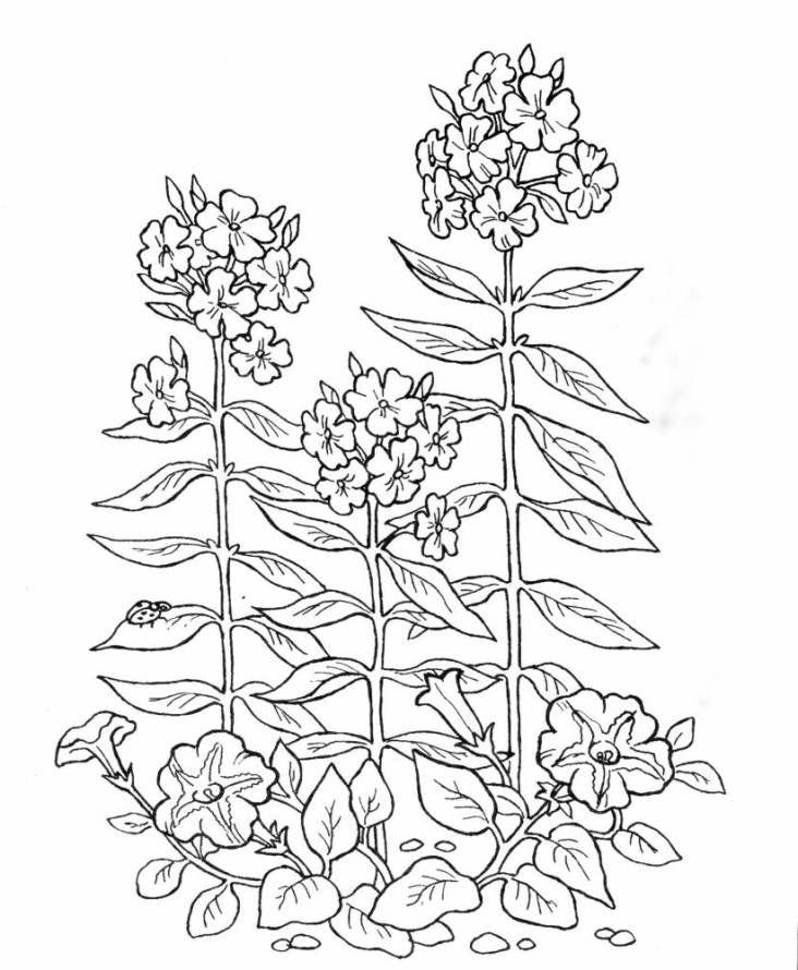Niedlich Malvorlagen Bäume Pflanzen Und Blumen Galerie ...