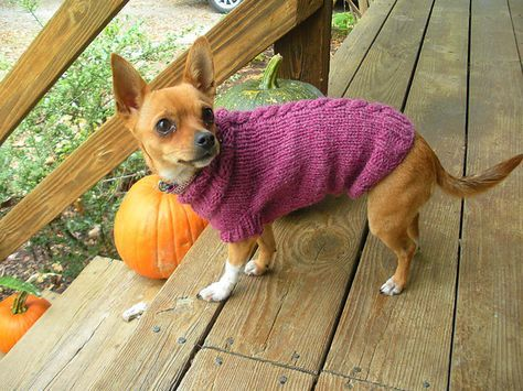 Ravelry: Single Cable Small Dog Sweater pattern by Autumn Bates ...