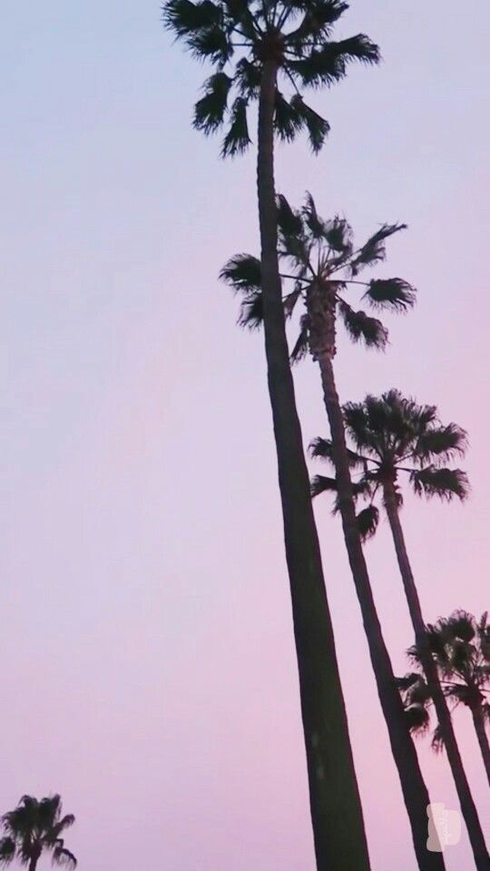 Phone Wallpapers Iphone Palm Trees Los Angeles