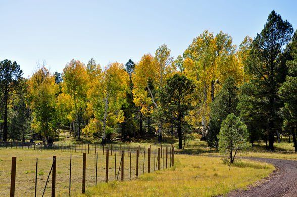 (©Coconino National Forest/Flickr, Creative Commons)