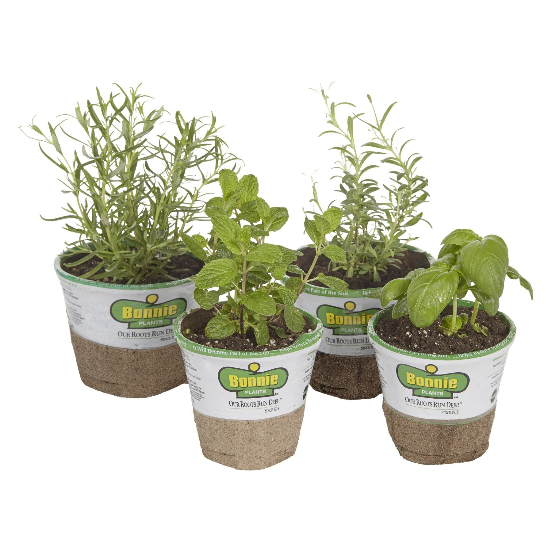 Bonnie Plants Cocktail Herb Garden Set Of 4 Live Plants