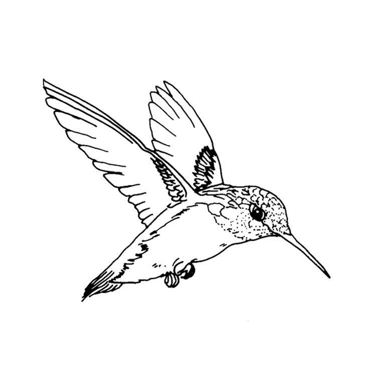 coloriage-oiseau-colibri-2.jpg (760×760) | dessin | Pinterest | Colibri