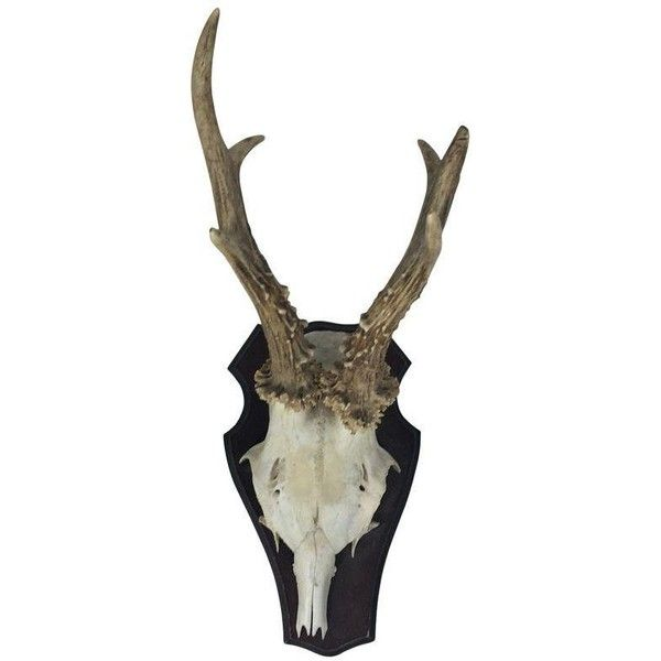 Vintage Black Forest Antlers ($94) ❤ Liked On Polyvore Featuring Home, Home  Decor