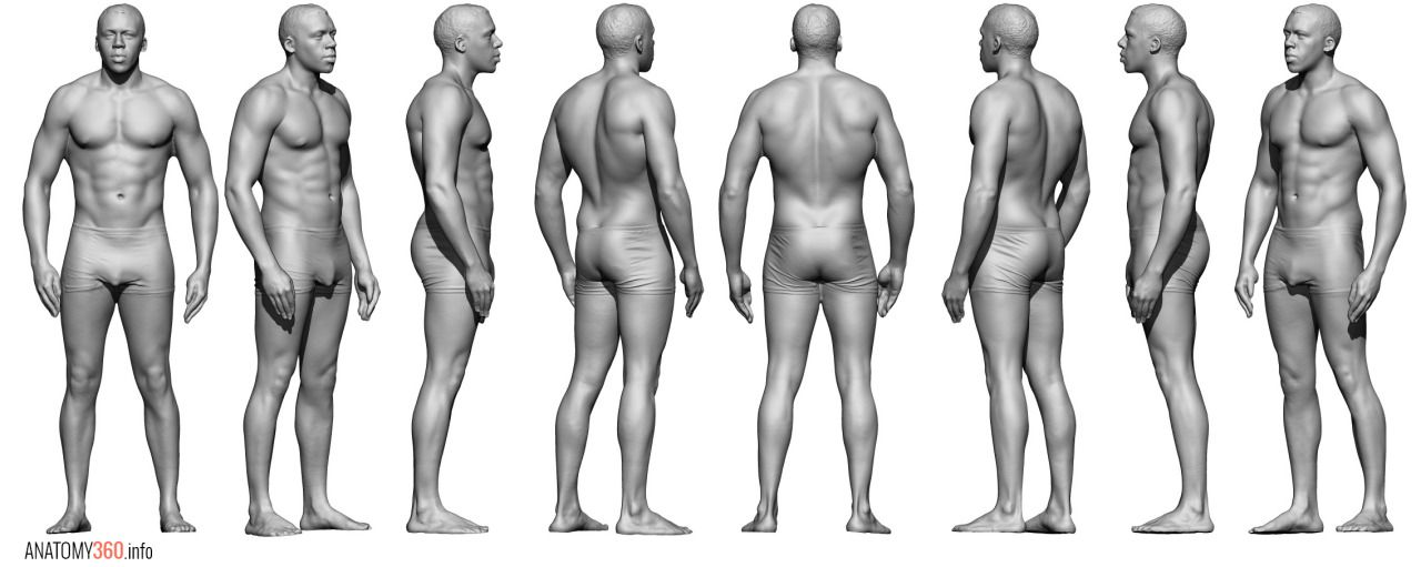 Pin by Mitch Miller on Anatomy/Poses in 2019 | Anatomy reference