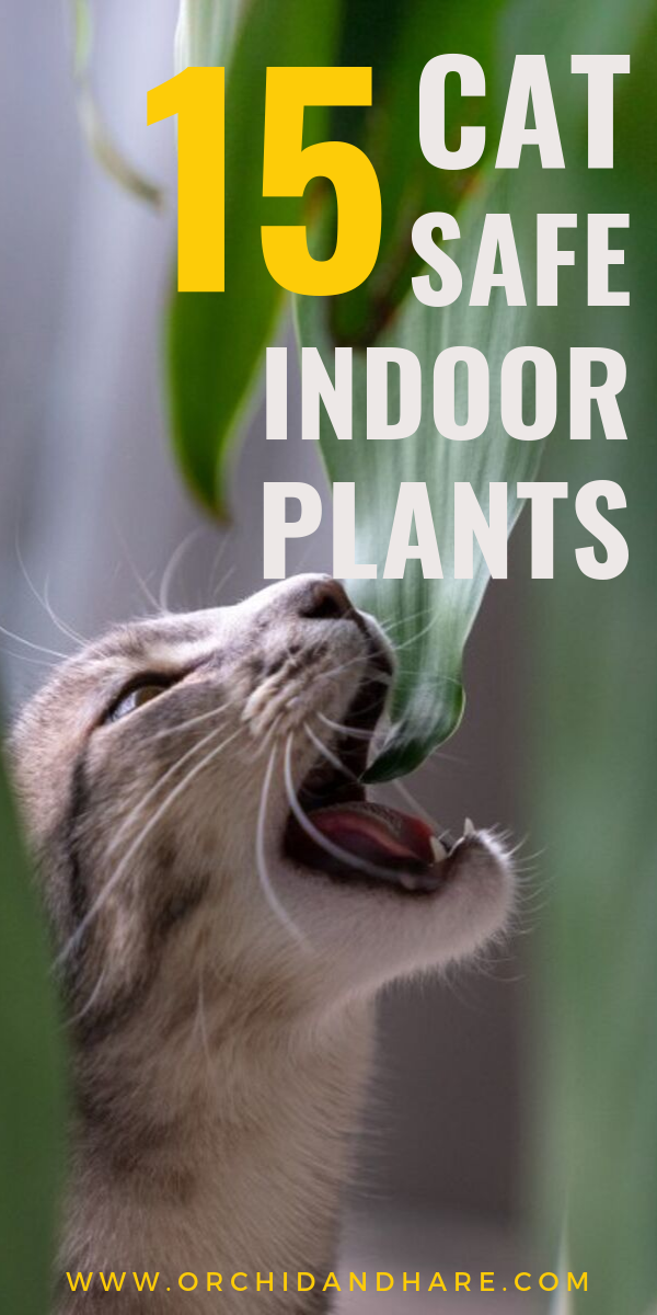 15 Low Maintenance Plants that are Safe for Cats Low
