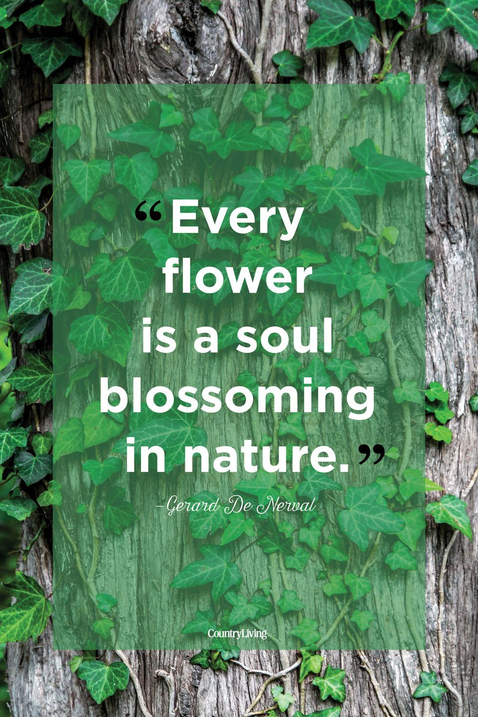 53 Beautiful Quotes About The Power Of Nature Mother Nature Quotes Nature Quotes Short Nature Quotes