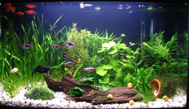 Queres armar un acuario acuarios peces de agua dulce - Pecera de pared ...