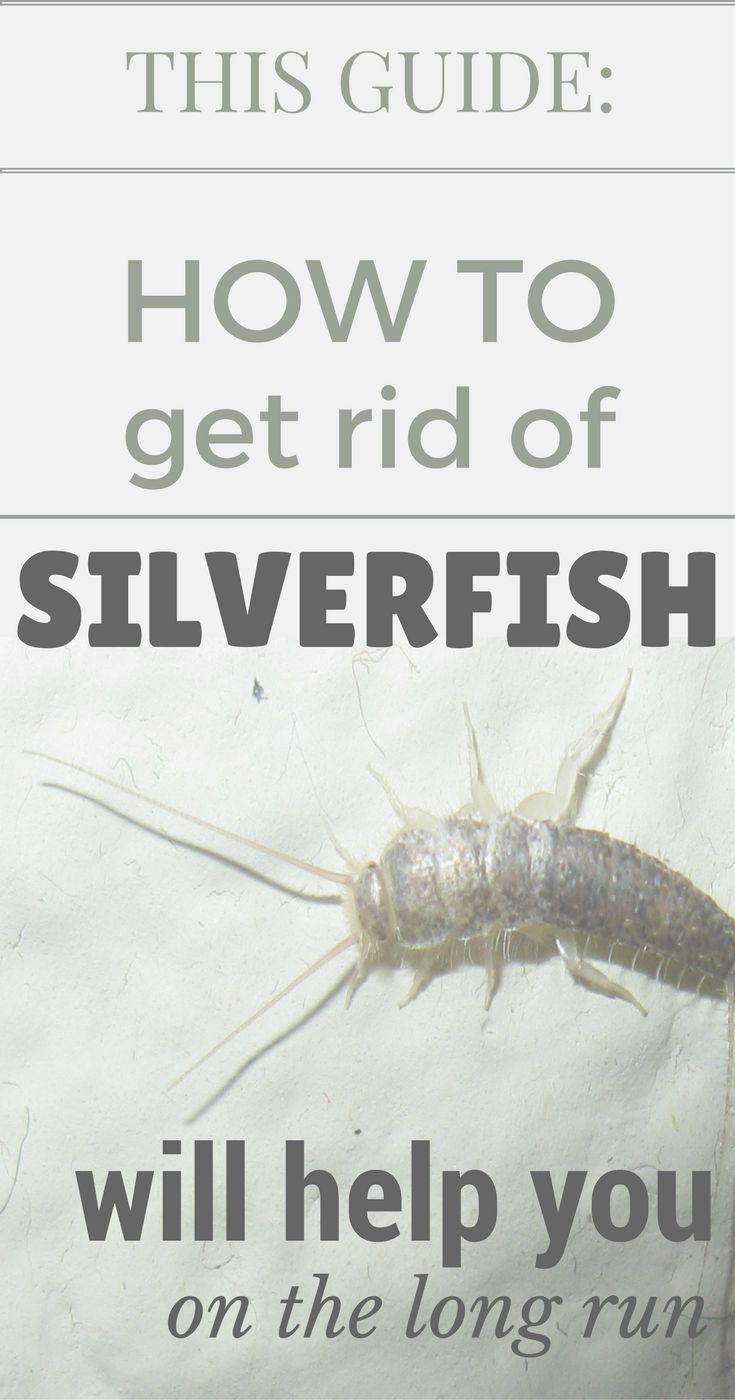 1d4dd6e4e3f286068280159dd101b30f - How To Get Rid Of Silverfish In House Uk