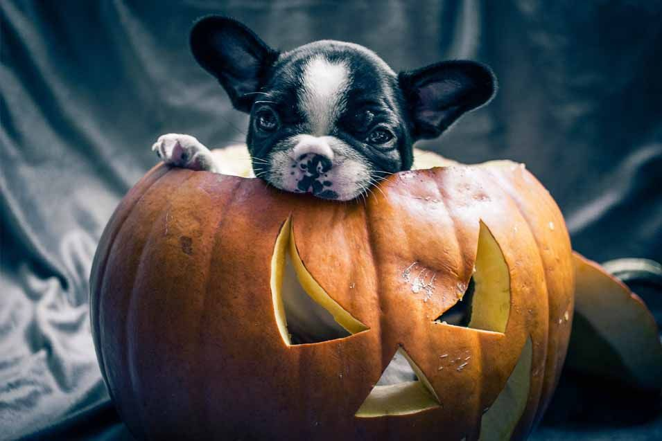 how much pumpkin do you give a dog for constipation