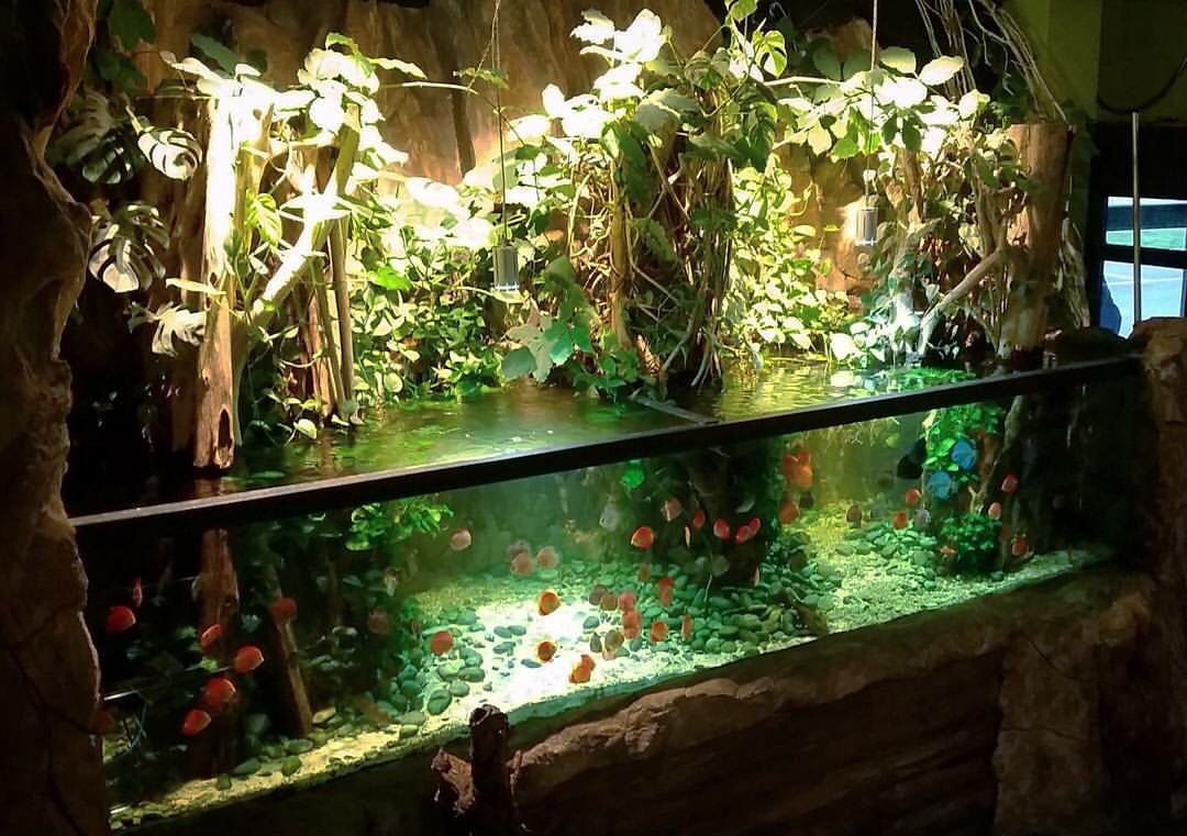 Amazon paludarium biotopen pinterest amazon for Amazon fish tank