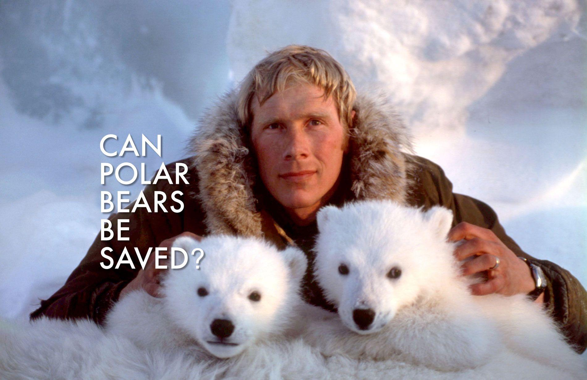 Dr. Steve Amstrup with cubs and GillSans | Polar bear, Bear, Polar bears  international