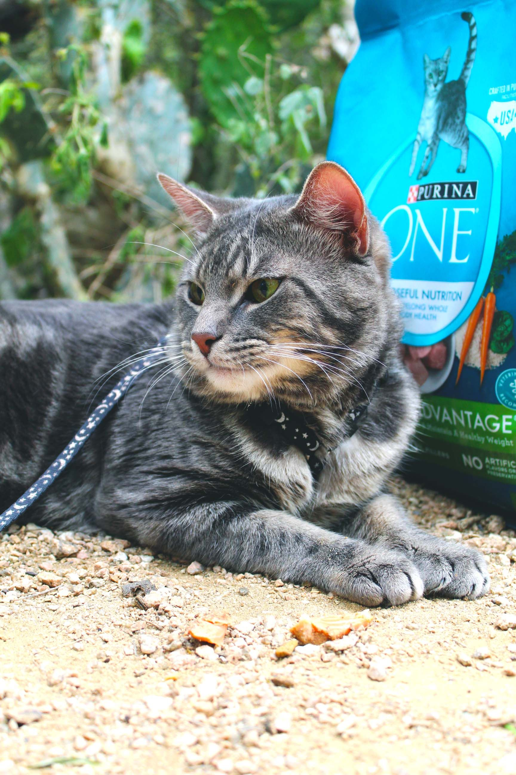 Get Your Cat Outdoors & Active with Purina ONE® Cats