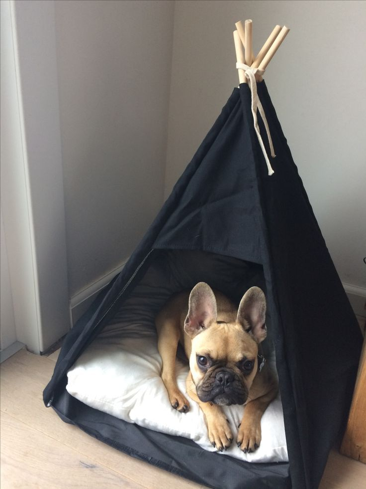 Photo of French Bulldog puppy in a TeePee #bulldogge #diyforpets #a …