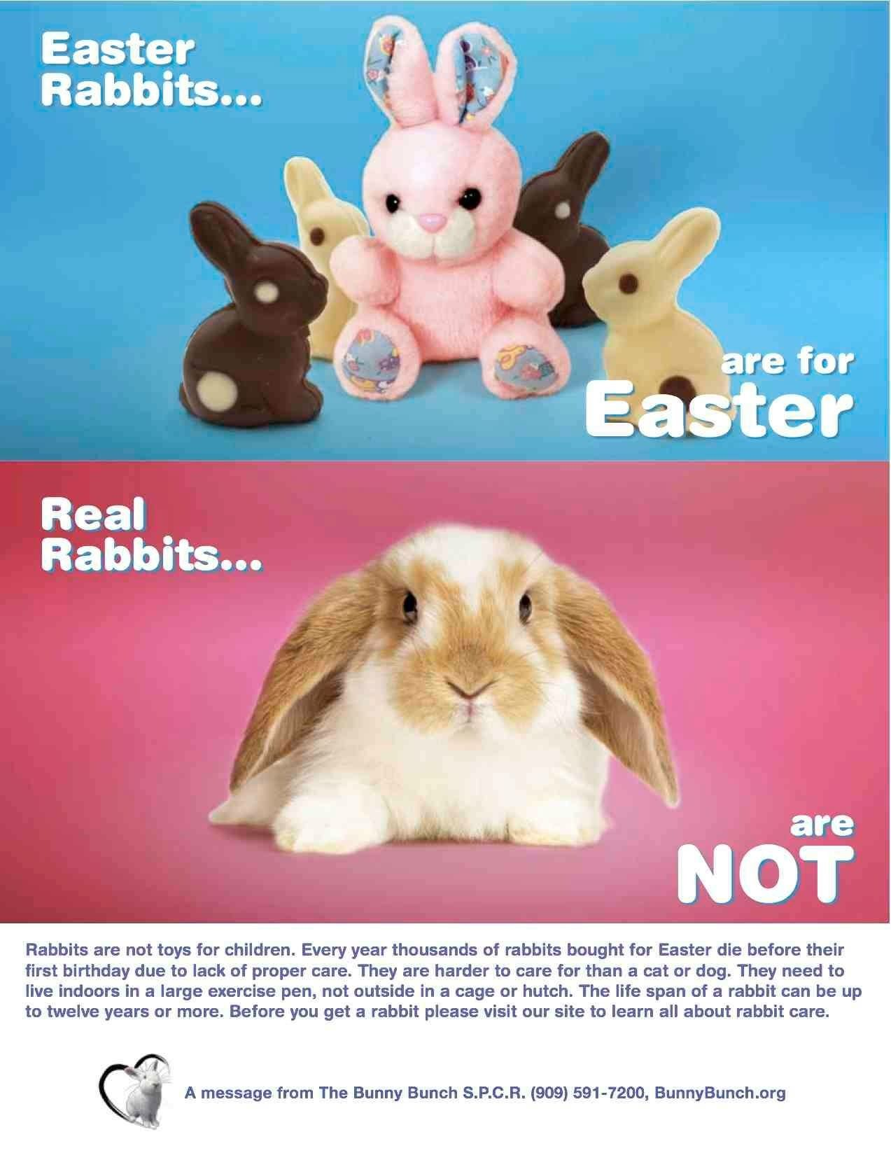 Real rabbits are not for easter not easterxmas gifts real rabbits are not for easter negle Choice Image