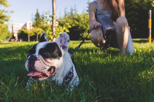 PAWS Chicago Tackling Pet Overpopulation in Chicago