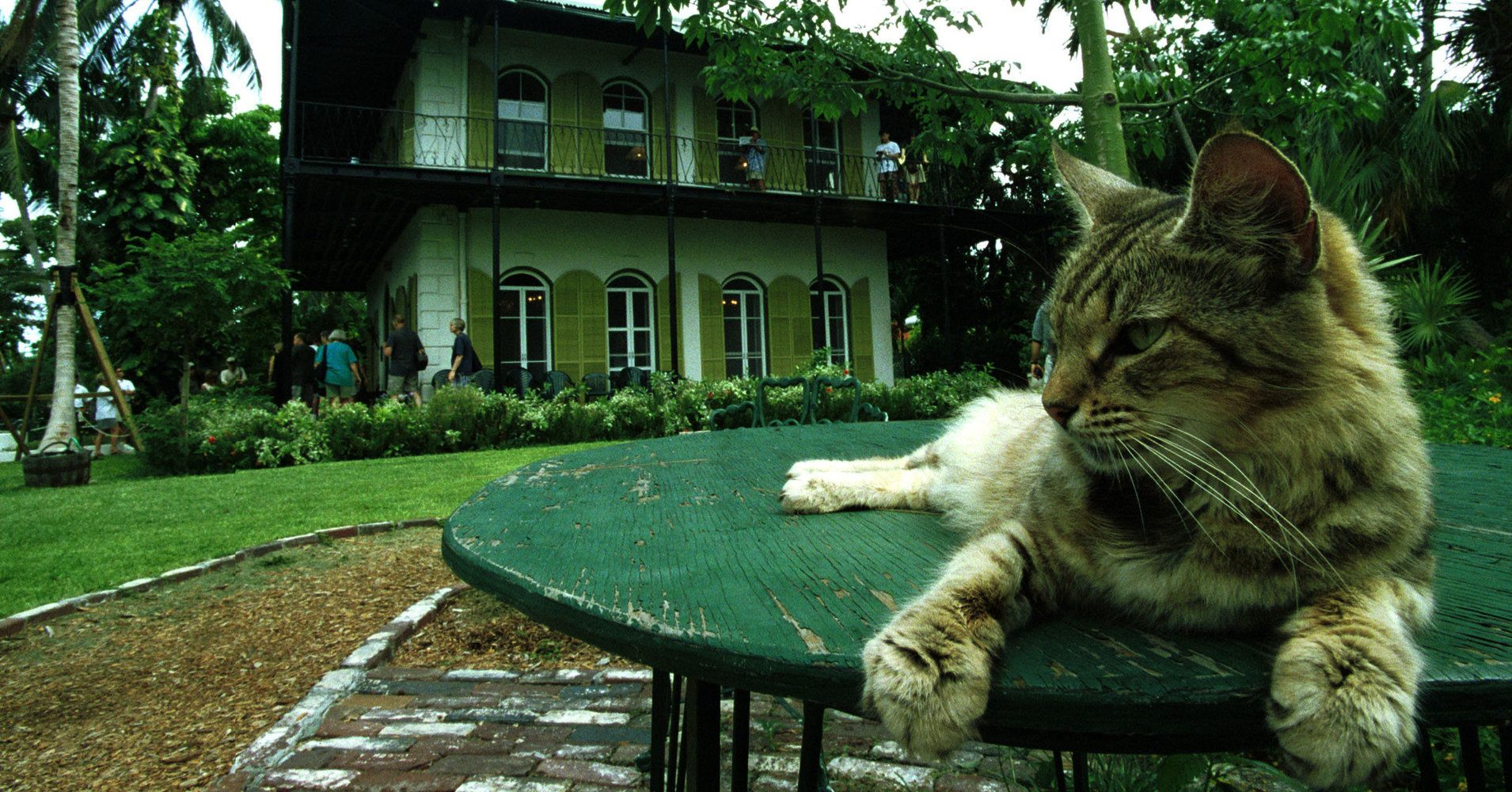 Hemingway's Cats Rode Out Hurricane Irma In A Limestone