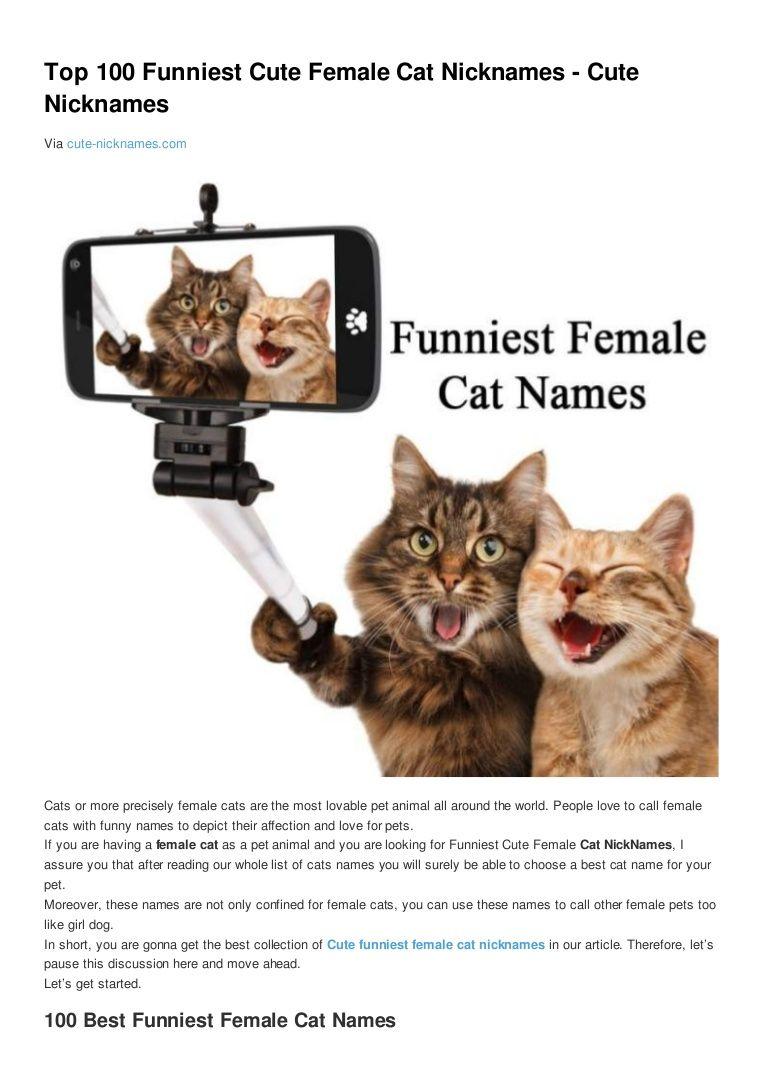Cute Cat Names Female Unique In 2020 Cute Cat Names Cat Names Cute Puppies Images