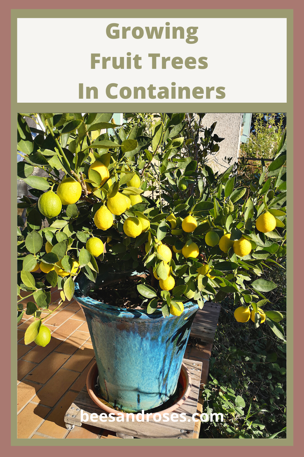 Growing Fruit Trees In Containers What You Need To Know Growing Fruit Trees Fruit Trees In Containers Growing Fruit