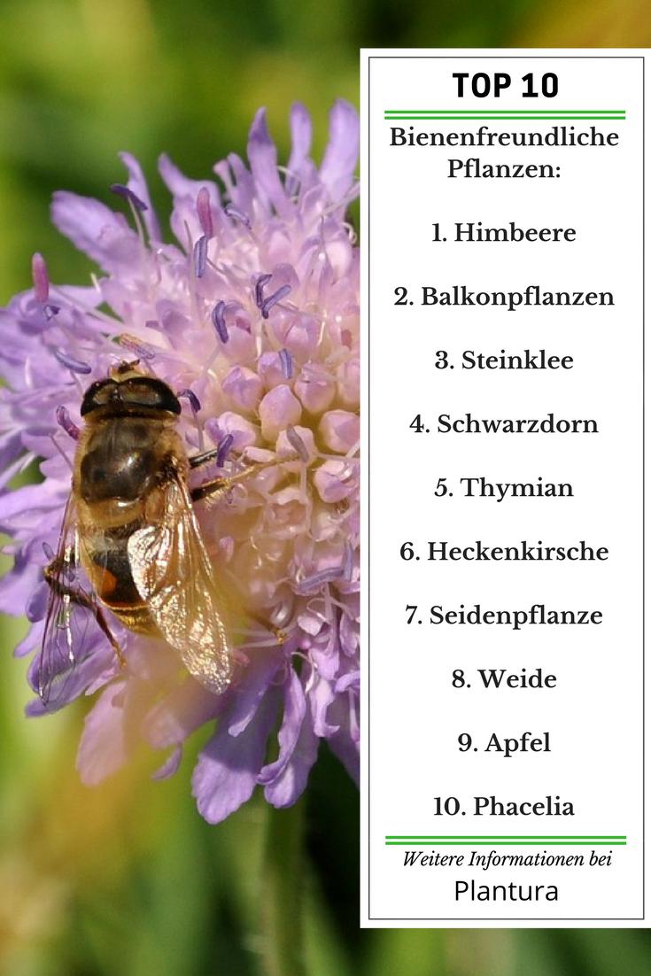 Top 10 Der Bienenfreundlichen Pflanzen Ubersicht Bienenfreundliche Pflanzen Pflanzen Pflanzen Pflege