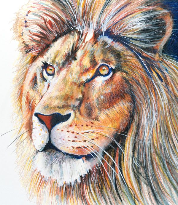 Colored Pencil Löwenkopf mit Buntstiften gemalt