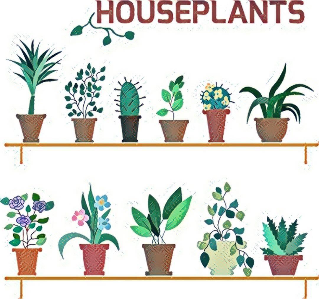 low light houseplants, indoor houseplants, air cleaning houseplants, best houseplants, clean air houseplants, on nasa air purifying houseplants