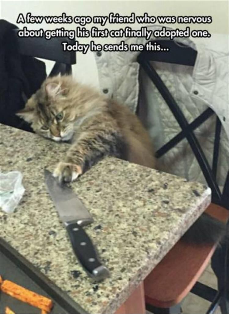 Photo of 17 Funny Animal Pictures