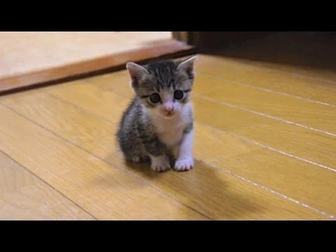 Cute Kitten Gets A Drink Of Water Page 2 Of 2 The Cutest Kitties Kittens Cutest Kittens Cute Cats