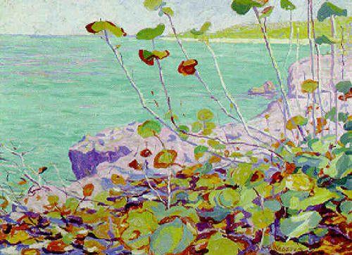 Wild Grape, Bermuda by E. Ambrose Webster