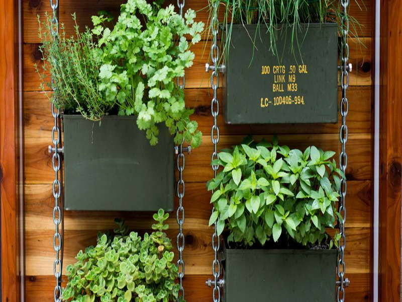 Vertical herb garden design garden ideas pinterest Indoor living wall herb garden